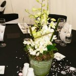 dendrobium-orchids