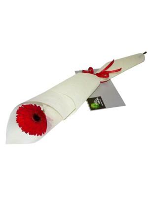 gift-vouchers-500x600