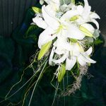 lily-trailing-earthy-2