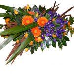 mandarin-iris