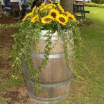 sunflower-wine-barrrel