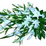 white-lily-sheath